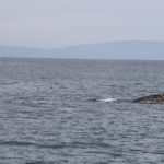 WhaleWatching41