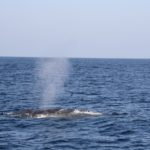 WhaleWatching12
