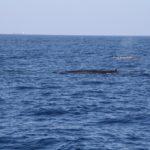 WhaleWatching27