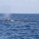 WhaleWatching39